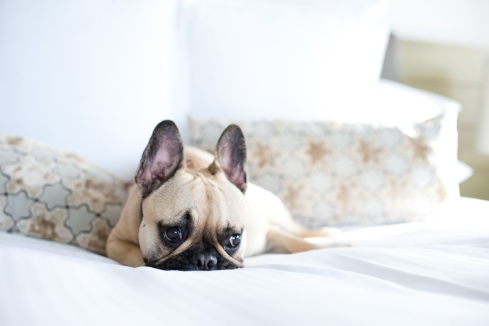 Sporte The Frenchie, Pier One Sydney, Pet Friendly hotel