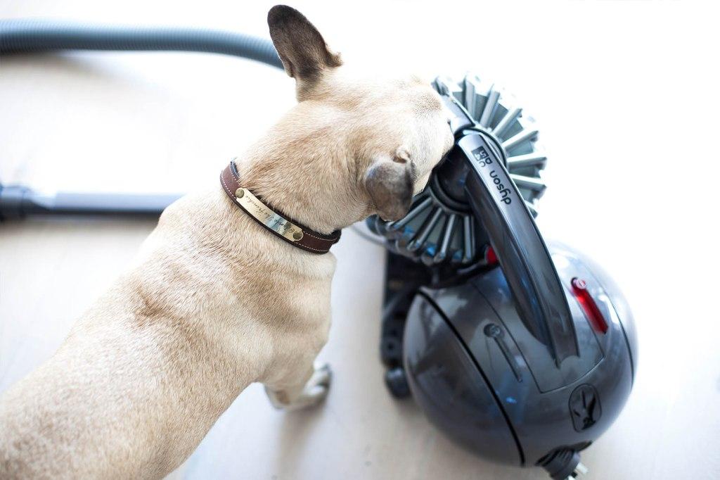 Pet vacuum cleaner, Sporte The Frenchie