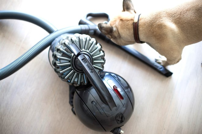 Pet vacuum cleaner, Sporte The Frenchie
